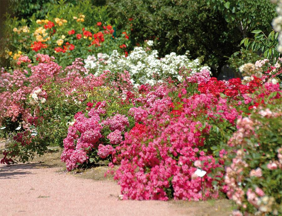 Jardin aux plantes parfum es la bouich re tourisme - Jardins a l anglaise ...